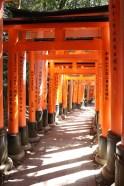 1 torii gates again