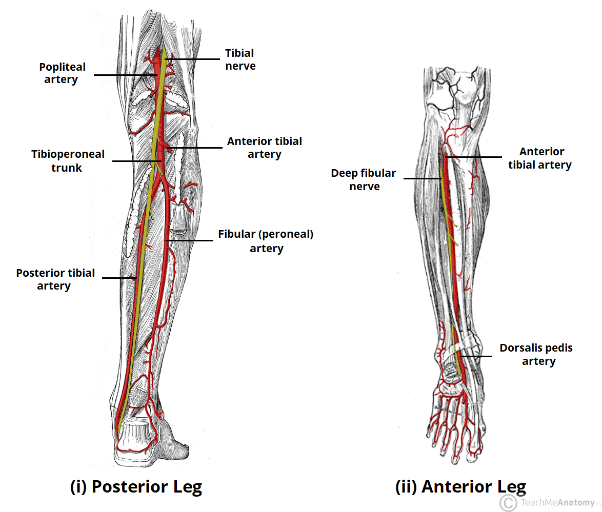 Lower Extremity Arterial Worksheet