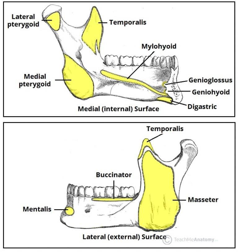 Bones of the Head - TeachMeAnatomy