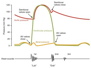 The Cardiac Cycle  Pressures in The Heart  TeachMePhysiology