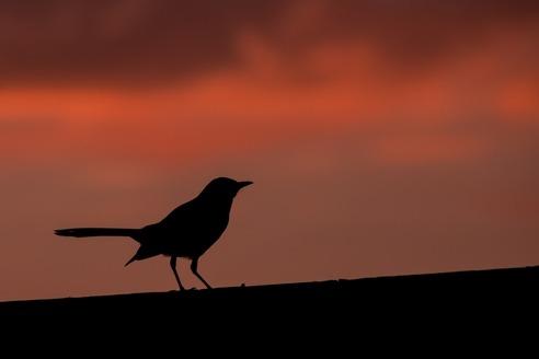 Teaching symbolism in To Kill a Mockingbird
