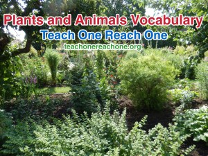 Building Vocabulary – Plants and Animals – Teach One Reach One