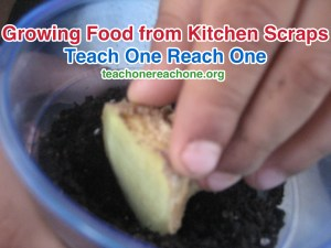 Growing Food from Kitchen Scraps – Teach One Reach One