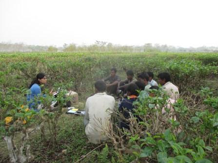 Sonari-Nazira Sub Area