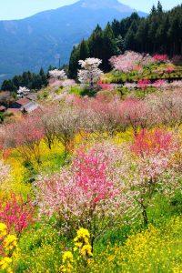 Japanese Tea Marathon - Registration, Participation, What to Expect Cover