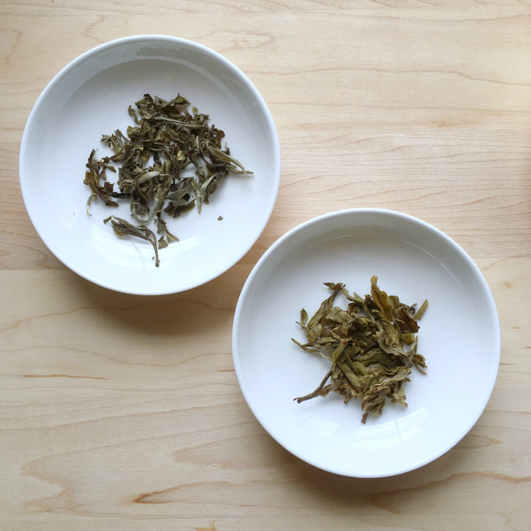 The Tea Spot Monkey Picked White Tea Dishes