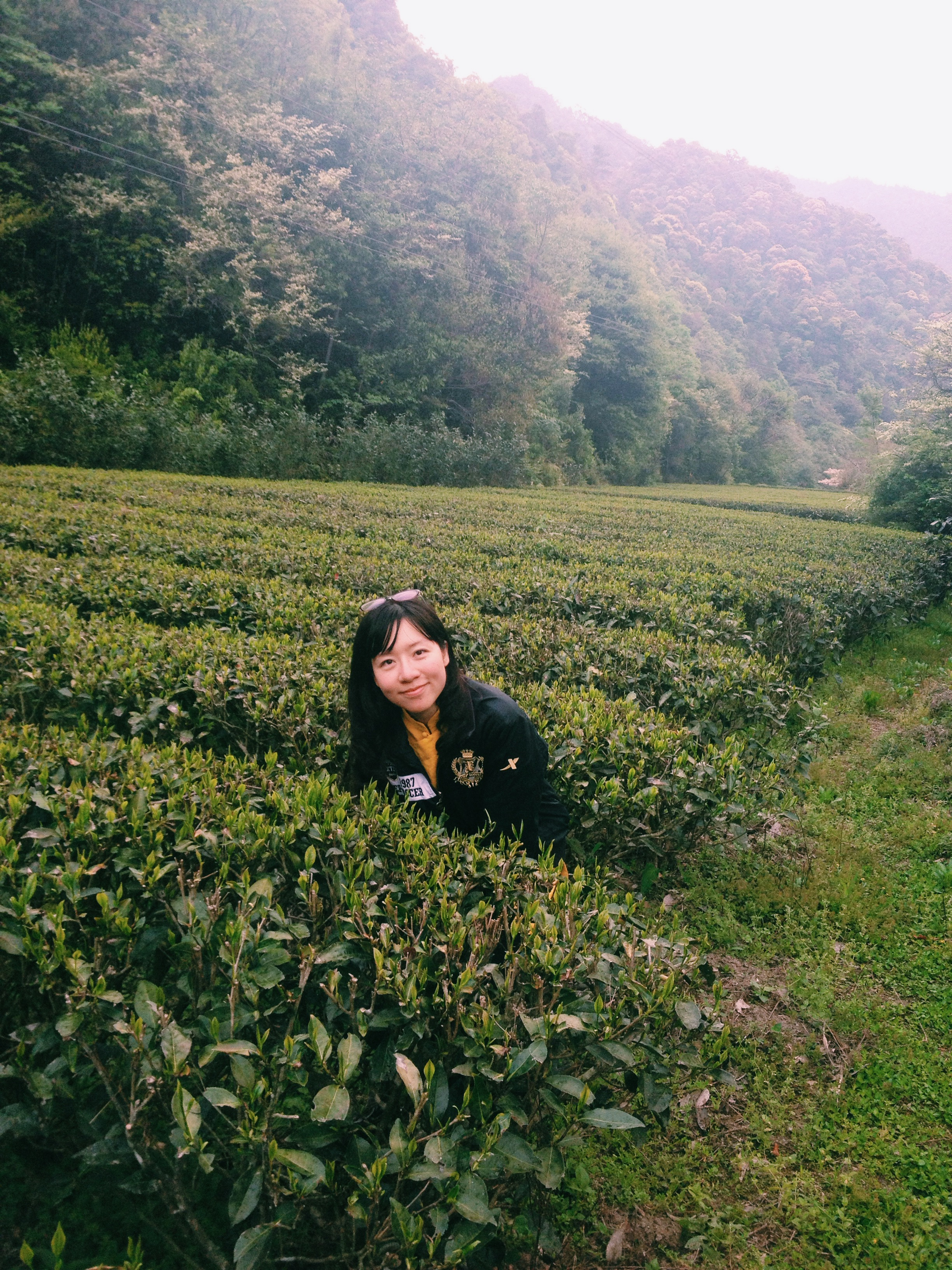 In Rou Gui tea garden in Da'an county, Wuyi, China.