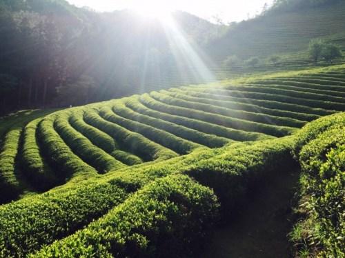 tj2_harvest16_art_ujeon-sejak_garden