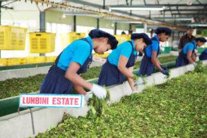 Premium tea from Sri Lanka.