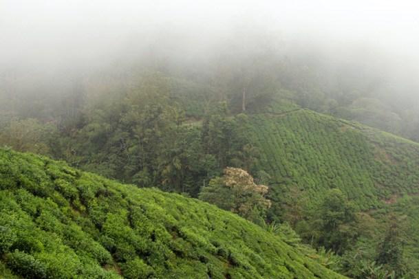 Habu Tea Garden