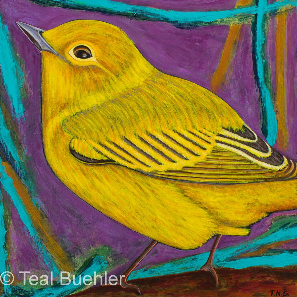 Yellow Warbler - 12 x12 on Masonite