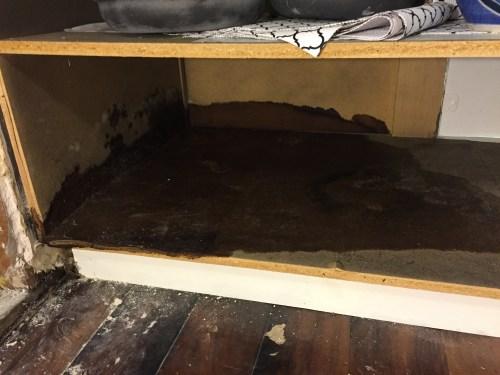 mold inside cabinet