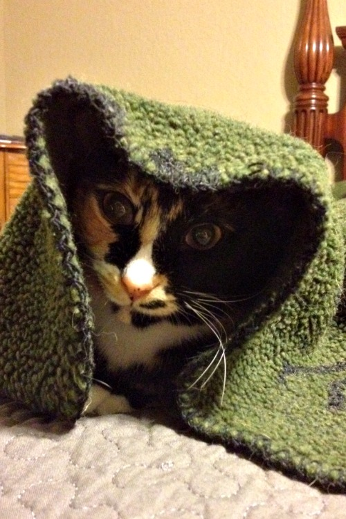 Tabitha the Ewok Cat