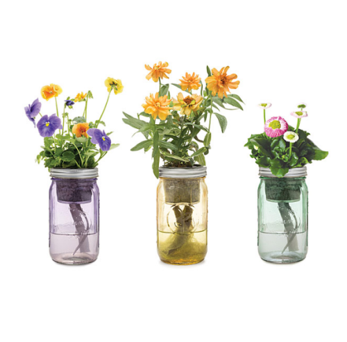 mason jar indoor garden