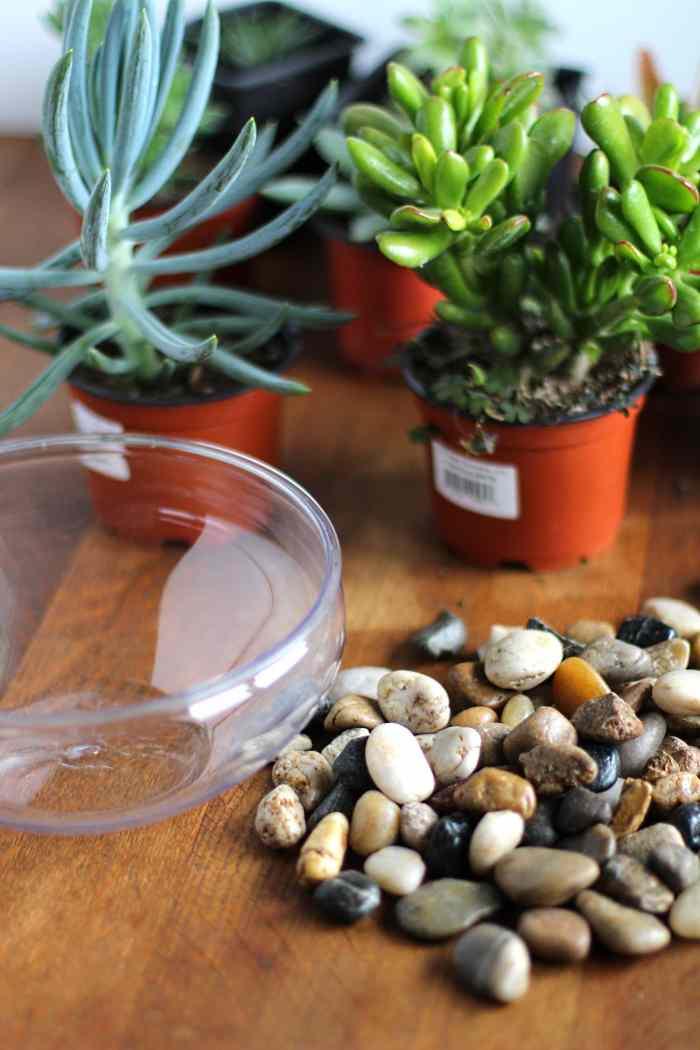 succulent planter ideas
