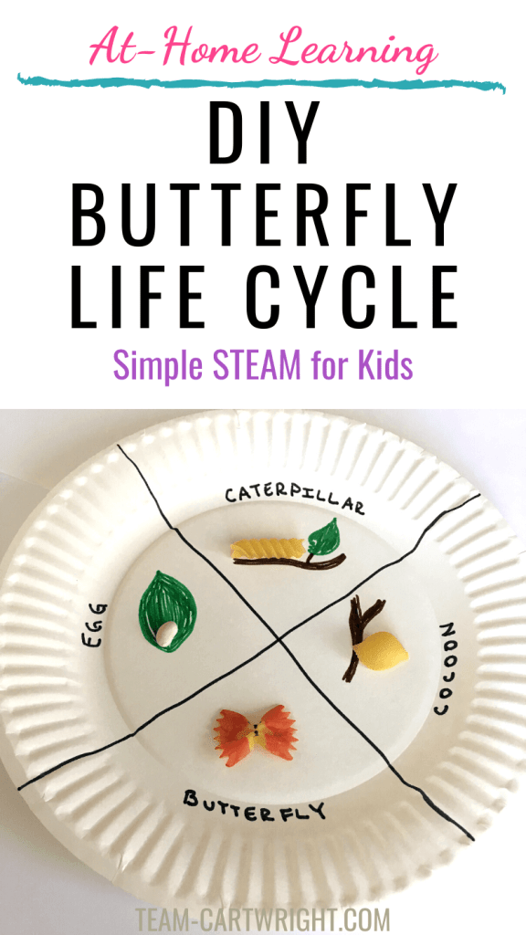 DIY butterfly life cycle STEM activity with picture of paper plate butterfly life cycle craft