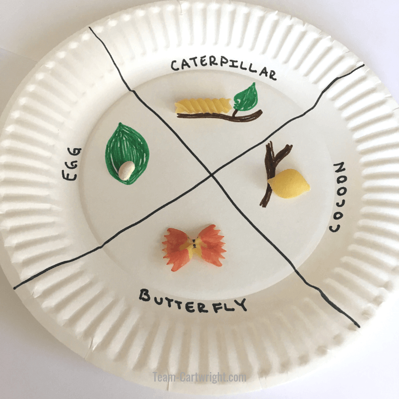 Butterfly life cycle STEAM project