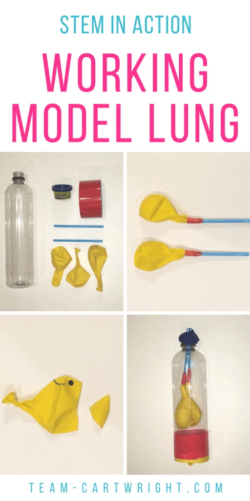 how to build a working model lung for kids