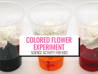 picture of 3 carnations in cups of colored water. Text: Colored Flower Experiment Science Activity for Kids