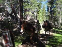ponies at yosemite