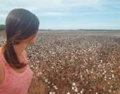 Cotton fields of Georgia