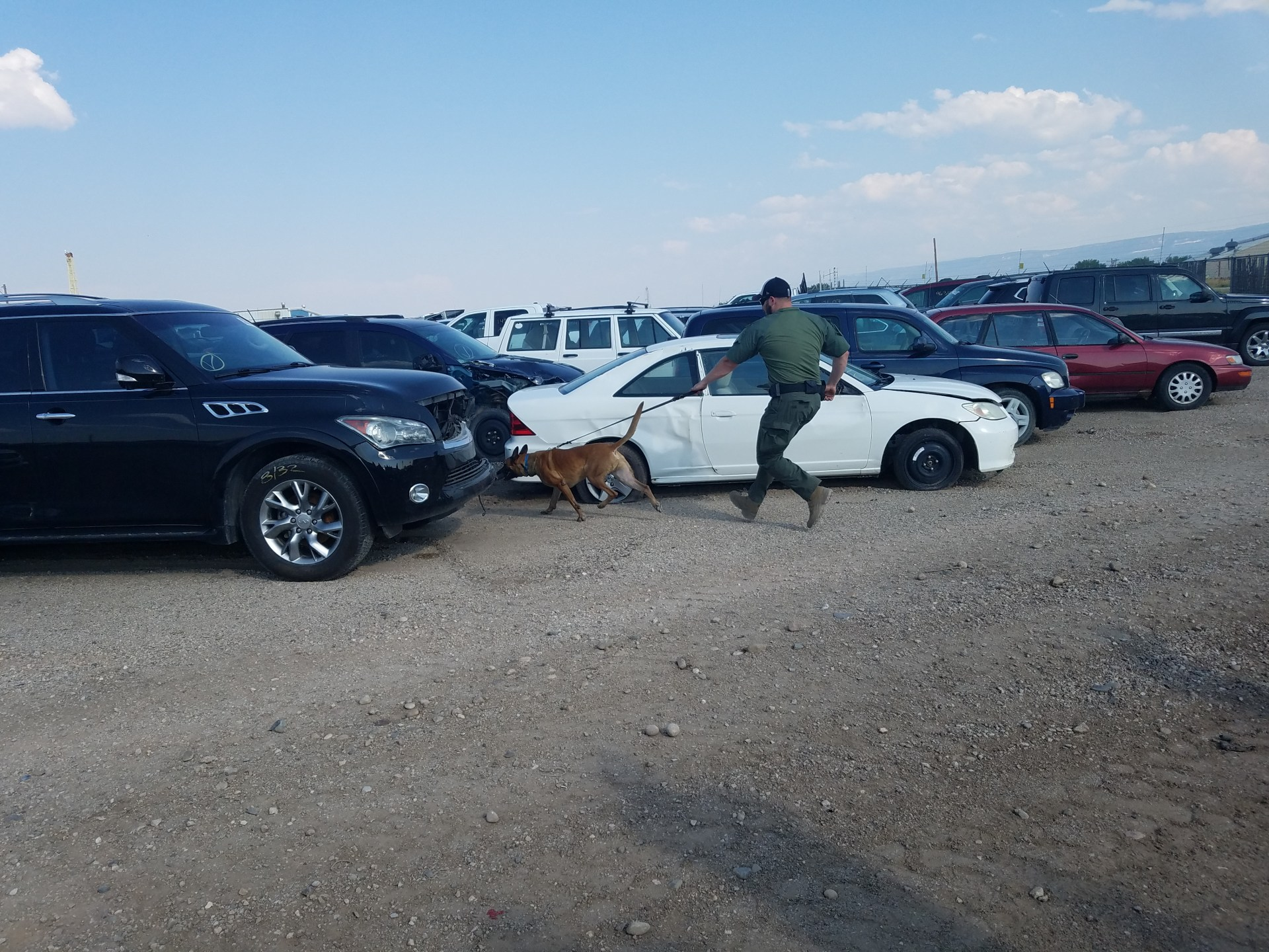 Copart car lots are an ideal location for k-9 officer training