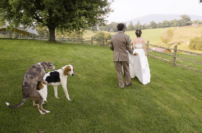 bad wedding photos, humping dogs, funny