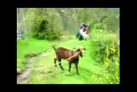 Great video of Oprah Winfrey and the yelling goat here on Team Jimmy Joe Bad Oprah Winfrey Fail