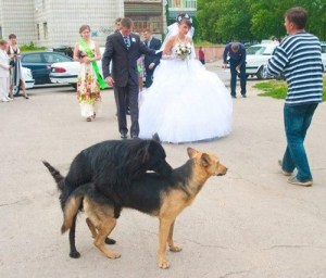 Funny Wedding Photos: 12 More of the Bad & Ridiculous!