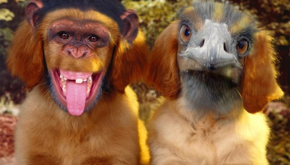 Dogs, puppies, Funny Animal Pictures, Animal Manipulations, animal mashups, Cute animals, cute puppies, cute dogs, cute kittens, cute dogs, furry animals, funny pets, bizarre animals, weird animals, wtf, strange animals, freaky, bizarre