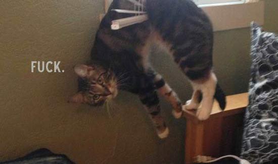 Cat Stuck in Blinds... Fuck ~ 20 Randomly Cool Pics & Memes