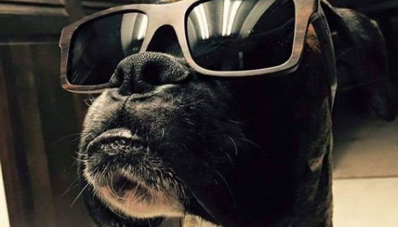 cool dog in sunglasses ~ funny animals that take better pictures than you