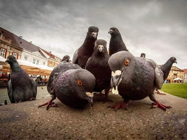 Animals that Look Like They're Posing for Album Covers