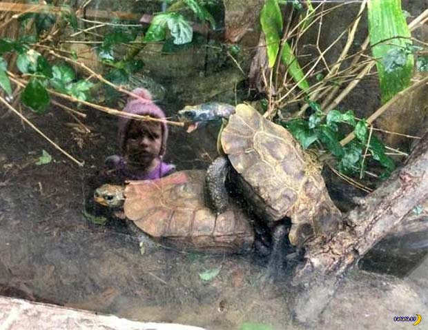33 Funny Pics of Random Offbeat Weirdness ~ creepy zoo turtles humping with girl's reflection