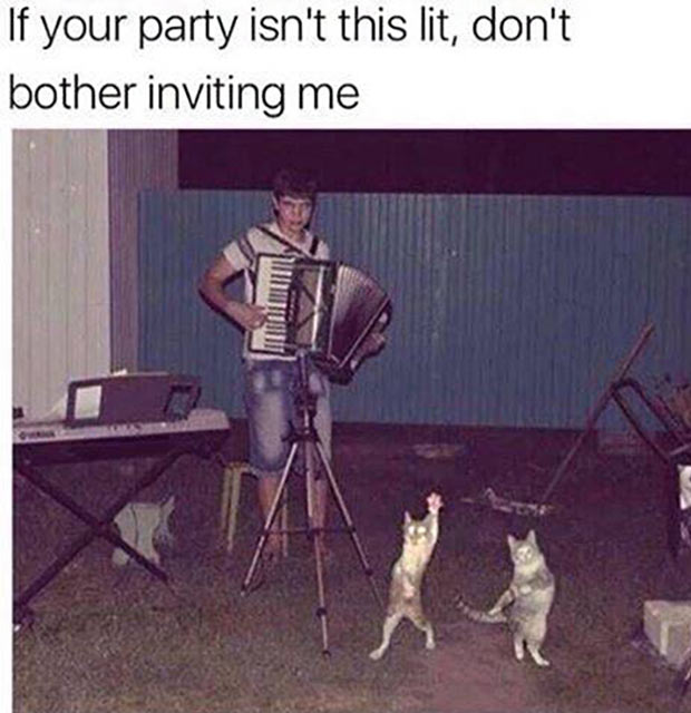 Funny party meme dancing cats