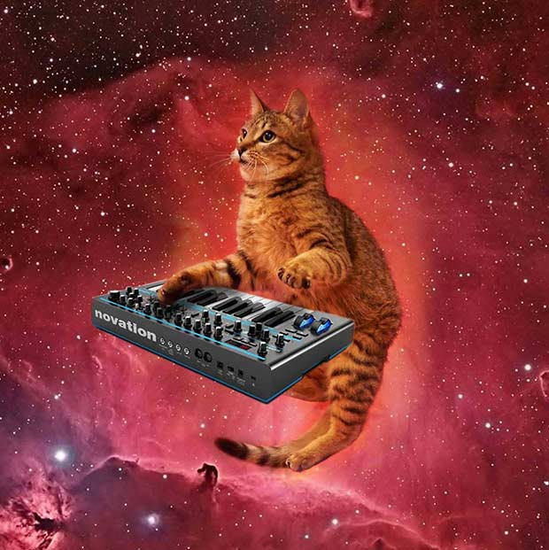 This cat rocks ~ 33 funny pics and memes