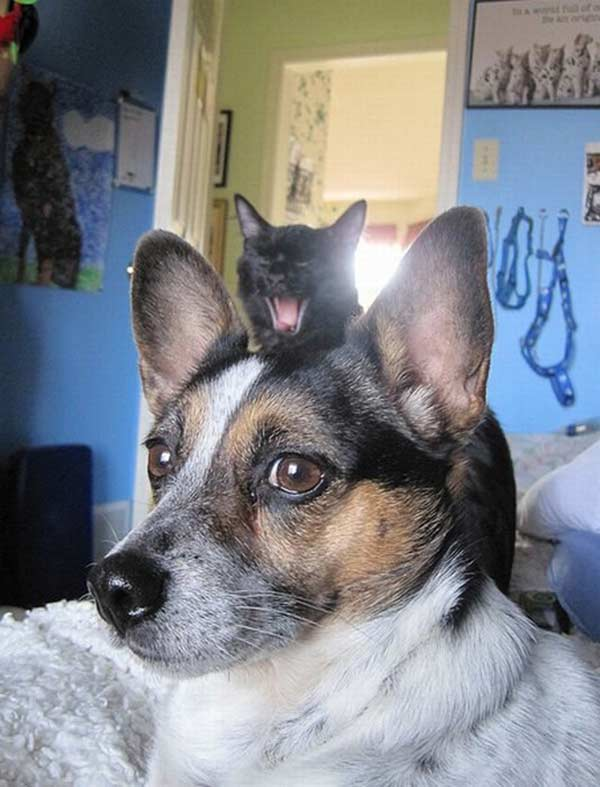 Hilarious Cat Photobombs Proving What Assholes They Can Be