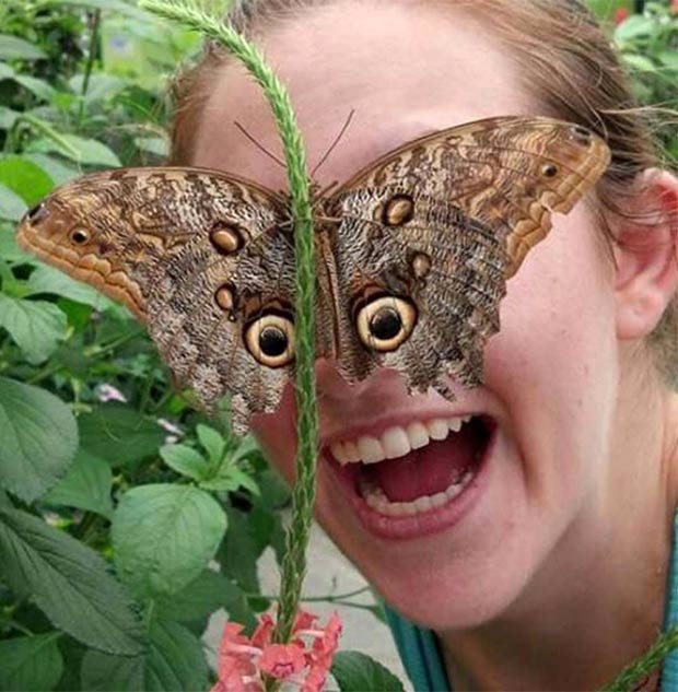 Great look! ~ 33 funny pics and memes butterfly eyes
