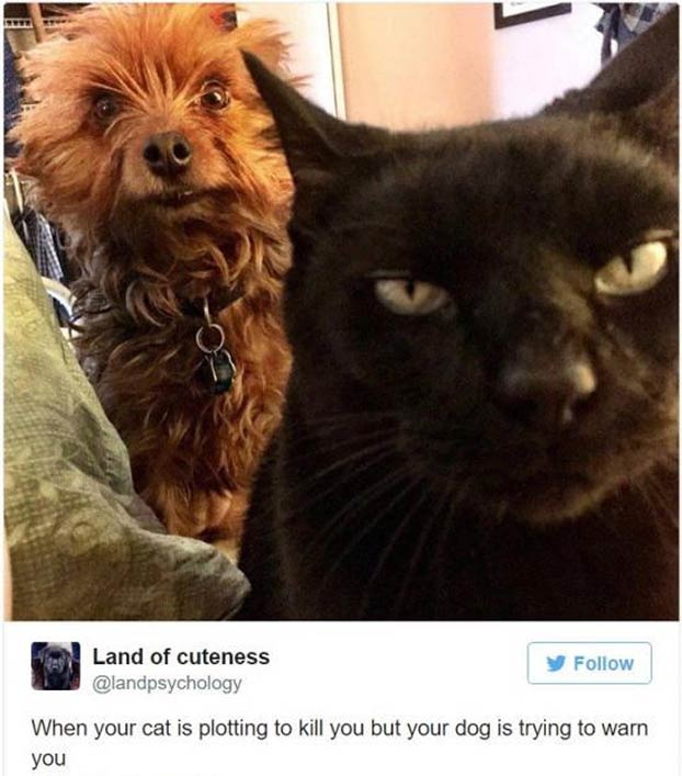 Funny dog and cat tweet ~ When your cat is plotting to kill you... ~ 35 Funny Pics & Memes