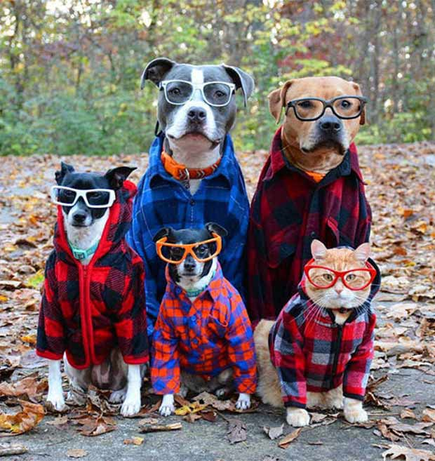 Perfect Family Portrait ~ Hipster dog and cat family in sunglasses and flannel ~ 35 Funny Pics & Memes