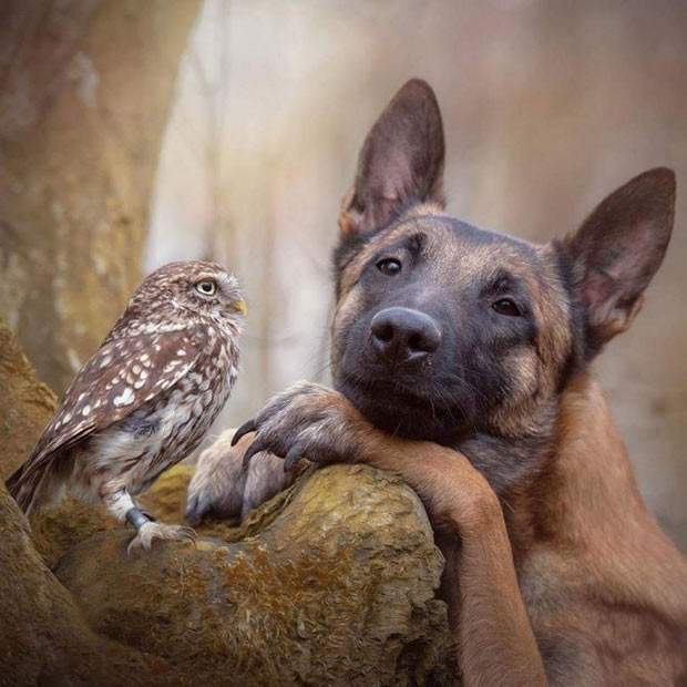 That'd make a great wedding announcement! loving, longing dog and hawk portrait ~ 35 Funny Pics & Memes
