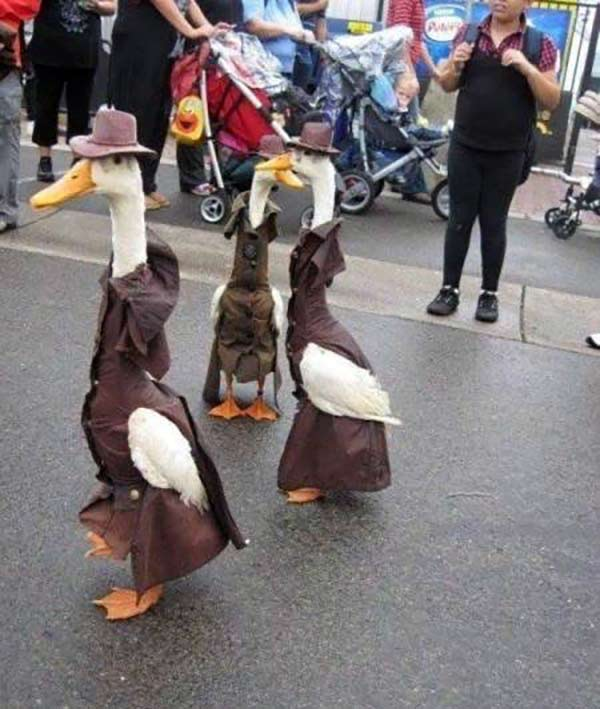 When ducks go to town... Funny ducks in people clothes.