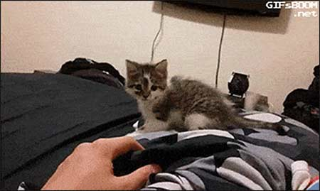Beware of the Force!... ... funny gifs cat flips off bed