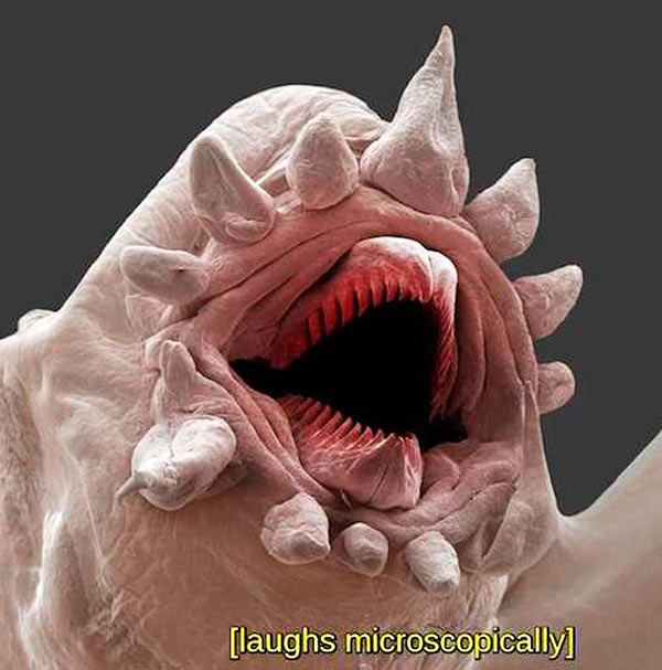 You're never safe from sarcasm... ~~ 37 funny pics & memes microscopic creature laughing