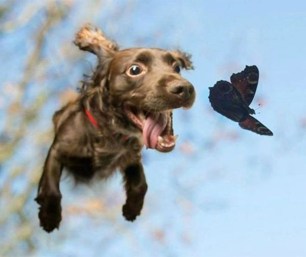Floating Dog and Butterfy... Most beautiful Picture Ever... Or At Least Today... Except Not For The Butterfly Who Was Soon Eaten