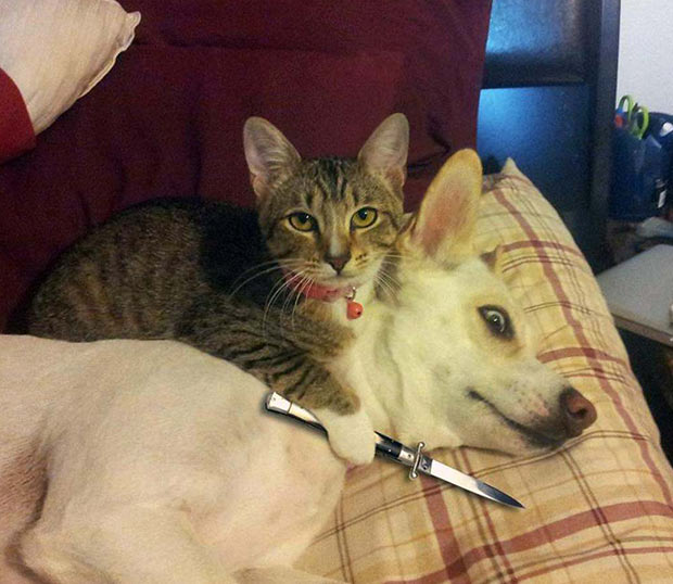 Why you can't just give a treat to the dog and not the cat... ~ Funny pics & memes