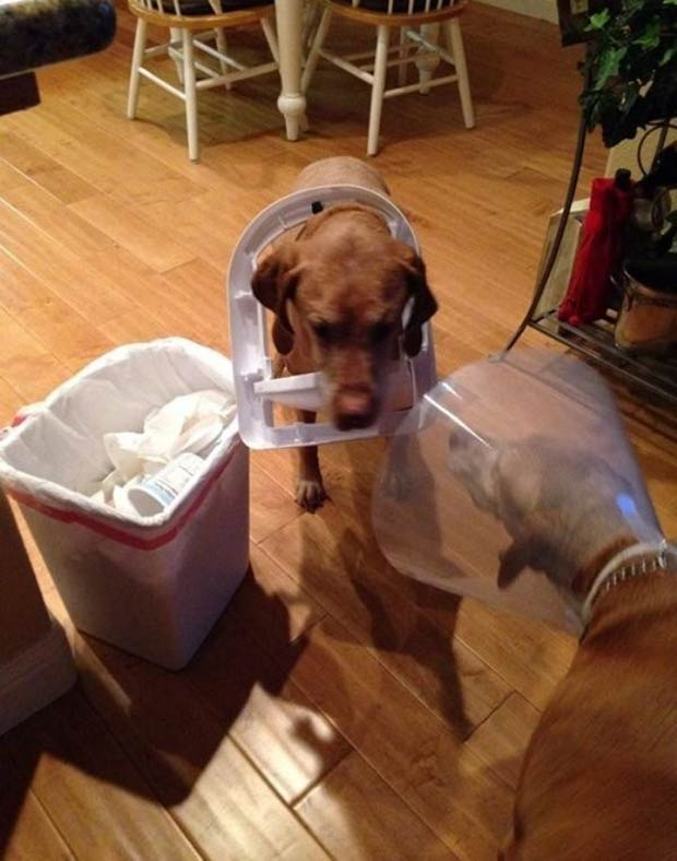 Aw! He's trying to make his sister feel better! ~ dog in garbage can lid cone of shame