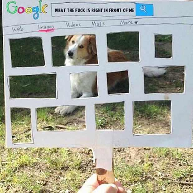 SEO search that knows you ~ what the f is right in front of me, funny cardboard cutout dog