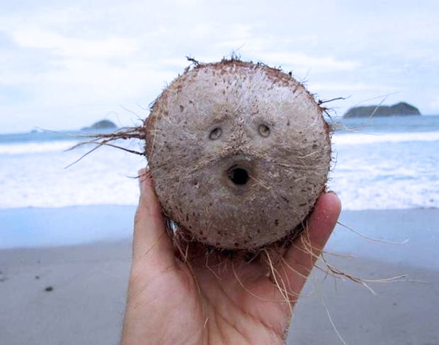 Oooh! funny coconut that looks like face