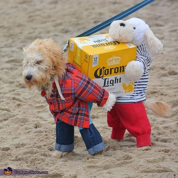 Corona Dog ~ Best Halloween Costumes ~ carry Corona beer 12-pack on beach
